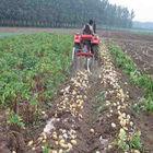 walking tractor mini single potato harvester