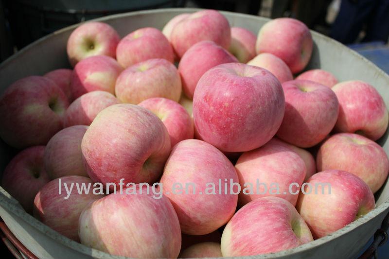Fresh fuji Apple wholesale name all fruits