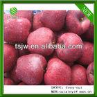 apple exporter
