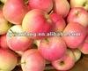 2014 fresh gala apple hot sale