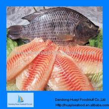 high quality tilapia ice fish