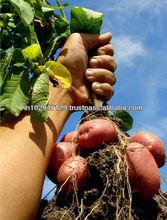 soil fertility & plant growth improver
