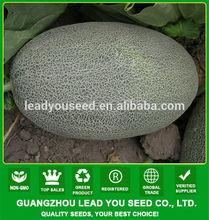 SM07 Ruili good quality f1 hybrid sweet melon seeds, thick white stripe, oval shape, orange flesh, 3-4kgs
