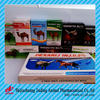 Hebei top veterinary pharmaceutical companies for medicines and drugs camel injection 25% 30% Tilmicosin injection