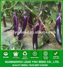 E01 Purple angel f1 hybrid purple long eggplant seeds, 33cm in length, 300Grams in weight