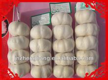 fesh pure white garlic
