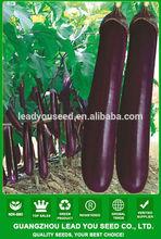 E10 Marshal mid-early maturity purple eggplant seeds, f1 hybrid eggplant seeds