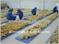 fresh Chinese 100g ginger mesh bag packing /Aimee
