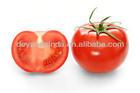 Chinese new fresh tomato