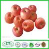 exporting grade Yantai Fuji apple with carton packing