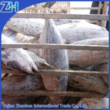 frozen albacore tuna export 8kg up