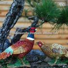 Simulation Resin Pheasants, Resin garden vivid animals, Decorative pheasants