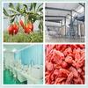 certified organic goji,goji berry,Chinese wolfberry