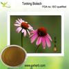 100% Natural Organic Echinacea Purpurea Extract Cichoric Acid