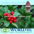 100% Natural Orangic Cranberry extrato em pó 10% - 25% antocianidinas boldo extrato em pó