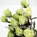natural de flores rosa e branco da flor rosa