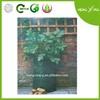 2014 PE Potato Plant Agriculture Grow Bag