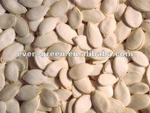 new crop snow white pumpkin seeds 13cm
