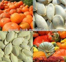 13cm White Pumpkin Seeds, 2012 Crop