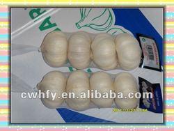 Fresh pure white garlic for garlic importer