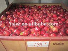 fresh Chinese Huaniu apple