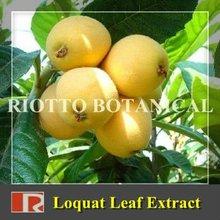 Pure Loquat Leaf Extract (Ursolic Acid 5%-98%)