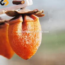 2015 hotsale super qualità selezionata aperto- aria secca frutta cachi