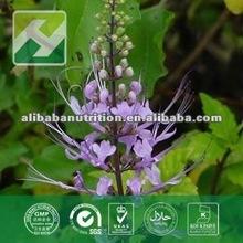Natural Tea Extract powder