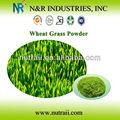Herbe de blé poudre de jus ou poudre d'herbe de blé