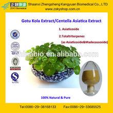 GMP Manufacturer Supply Natural Gotu Kola Extract Asiaticoside
