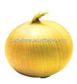 f1 híbrido semillasdecebolla para la siembra
