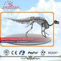 Dinosaurier-skelett fossilen position stehen