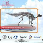 Dinosaur Skeleton Fossil Standing Position