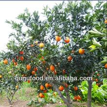2013 Fresh spring navel orange fruit