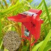 Rice wheat thresher