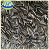 2013 Chinese black sunflower seed