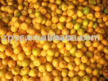 Fresh Ponkan Orange(Mandarin,Mandarin Orange,Lugan orange)