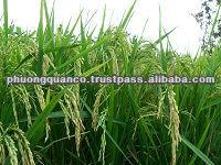 The Best Quality_Newest crop Vietnamese Long Grain White rice 5% broken