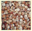 frozen Sichuan whole boletus edulis porcini mushroom(grade S)