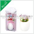 Mini planta diy ovo mágico, 2014 decoração de natal, feijão mágico ovo