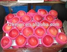 Yantai fuji apple new crop