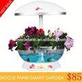 de flores e vasos berçário