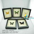 """Fousen ( 017 loài ngẫu nhiên ) tự nhiên và nghệ thuật 11 """" ( nền ) hình chữ nhật khung butterfly"""