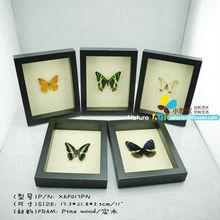 "FOUSEN(017 Random Species) Nature&Art 11""(background) rectangle framed butterfly"