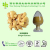 Professional Manufacturer Plant Extract Ginger Extract 1%~5%