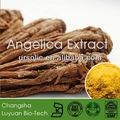 Meilleure qualité angelica extrait/ligustulide 1%/chinois herbes médecine