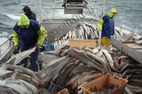 WORK IN CANADA FISHERIES,CONSTRUCTION AND TECHNICAL FIELD
