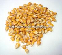 Pakistan yellow maize for animal feed