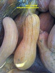 Fresh Pumpkin: High Quality and Competitve Price