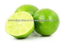 Fresh Lemon Supplier / Manufacture in India